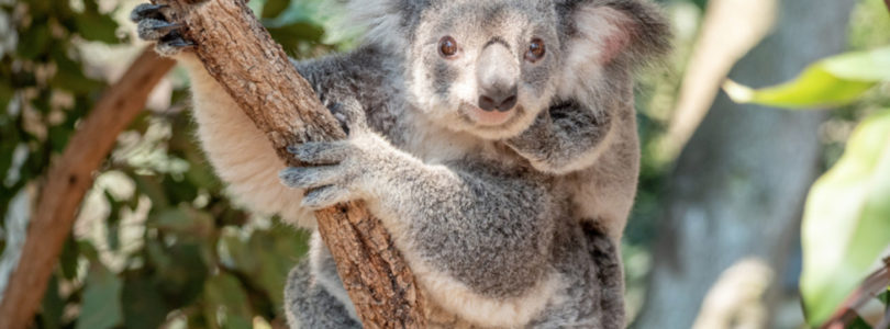 Six-month extension of Australia's JobKeeper scheme welcomed as lifeline for tourism industry