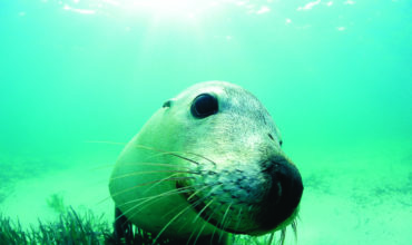 Perth secures world's largest marine mammal conference